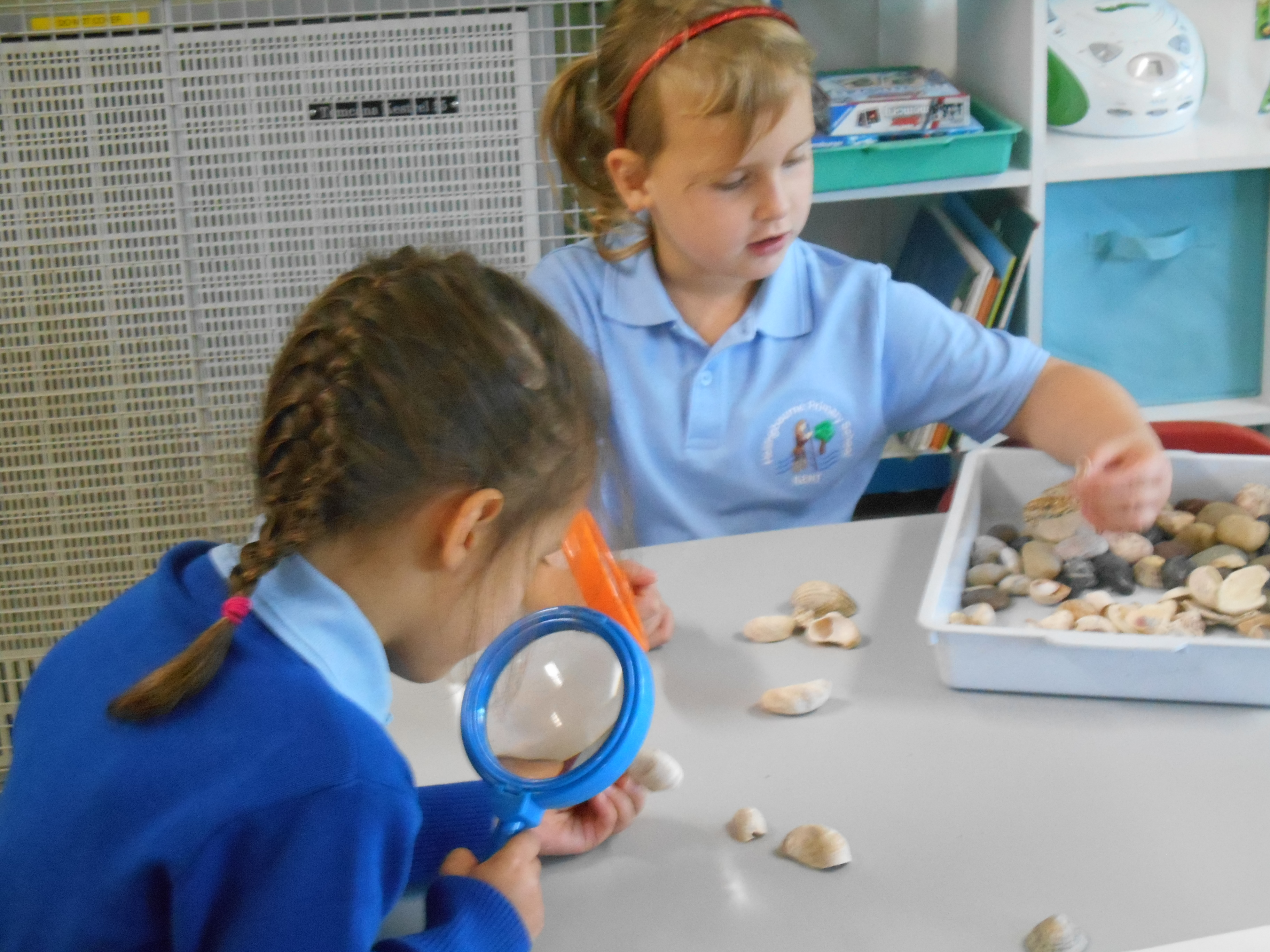 looking closely at shells and stones