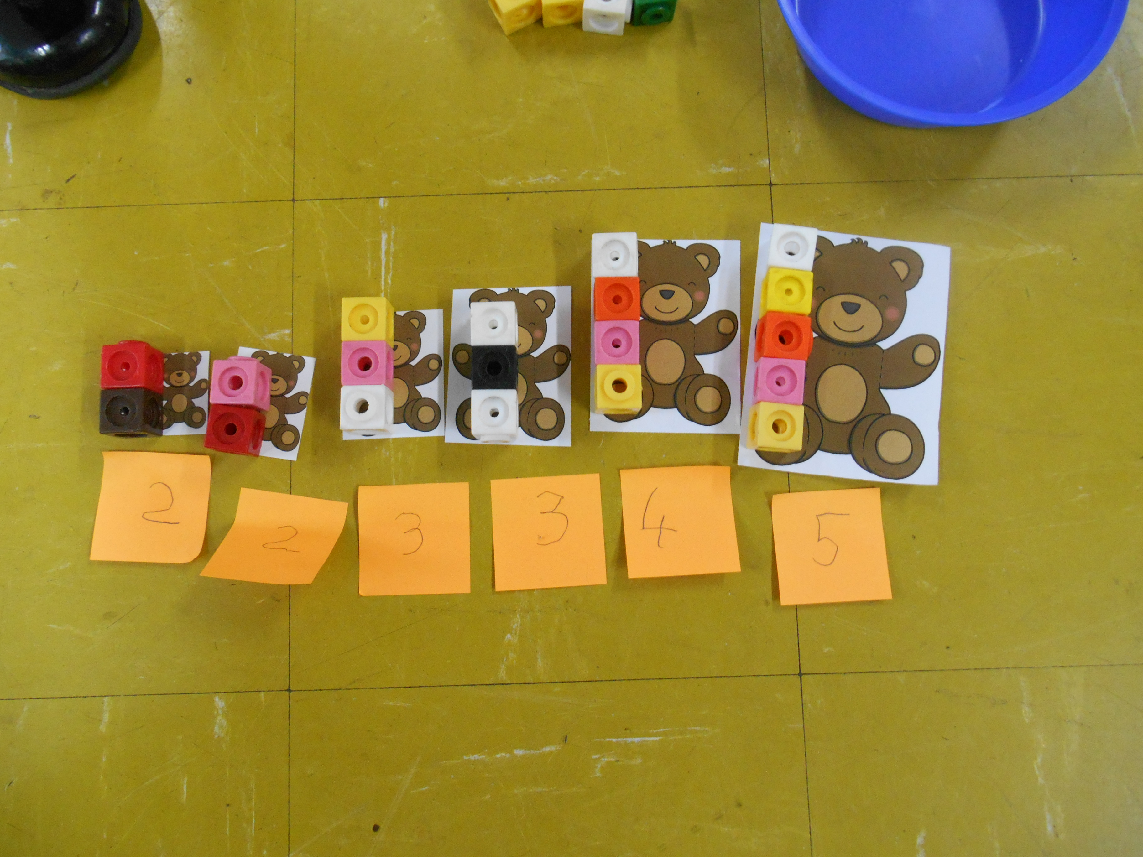 Ordering, measuring and labelling the bears.